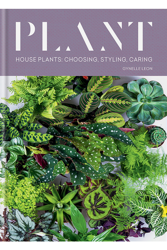 Plant: House Plants